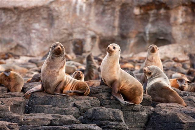 Seal Rocks