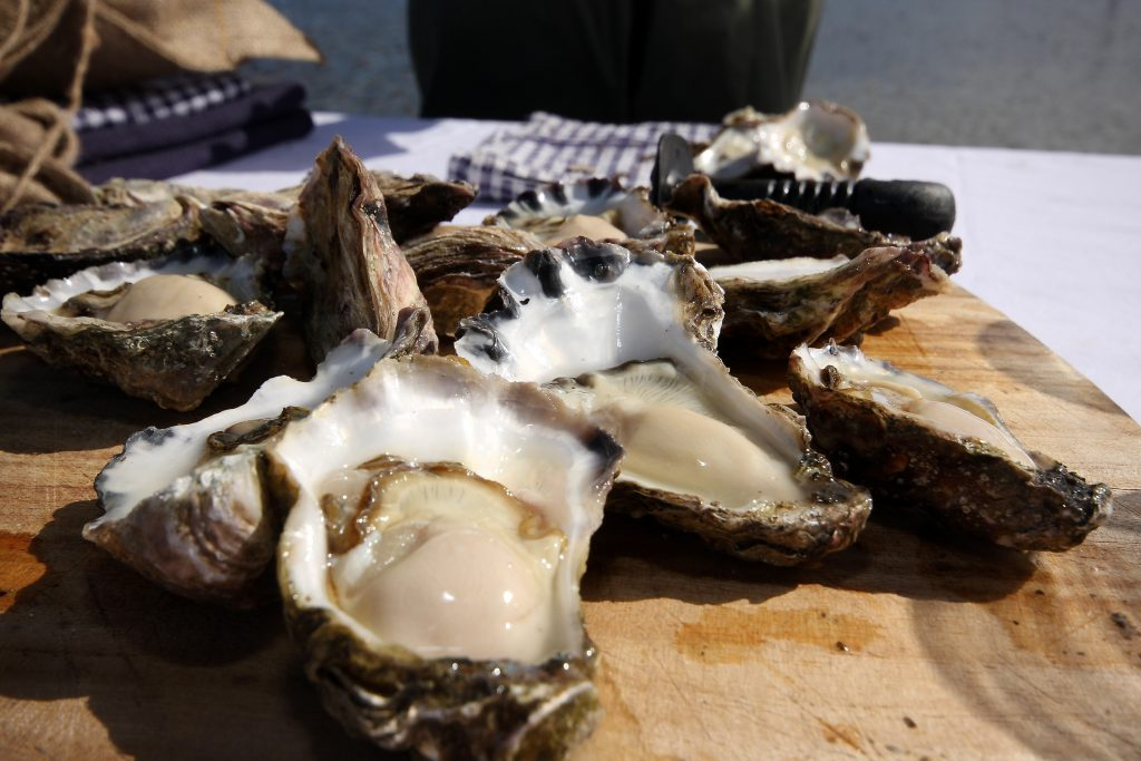 Fresh Oysters at Sapphire Coast NSW