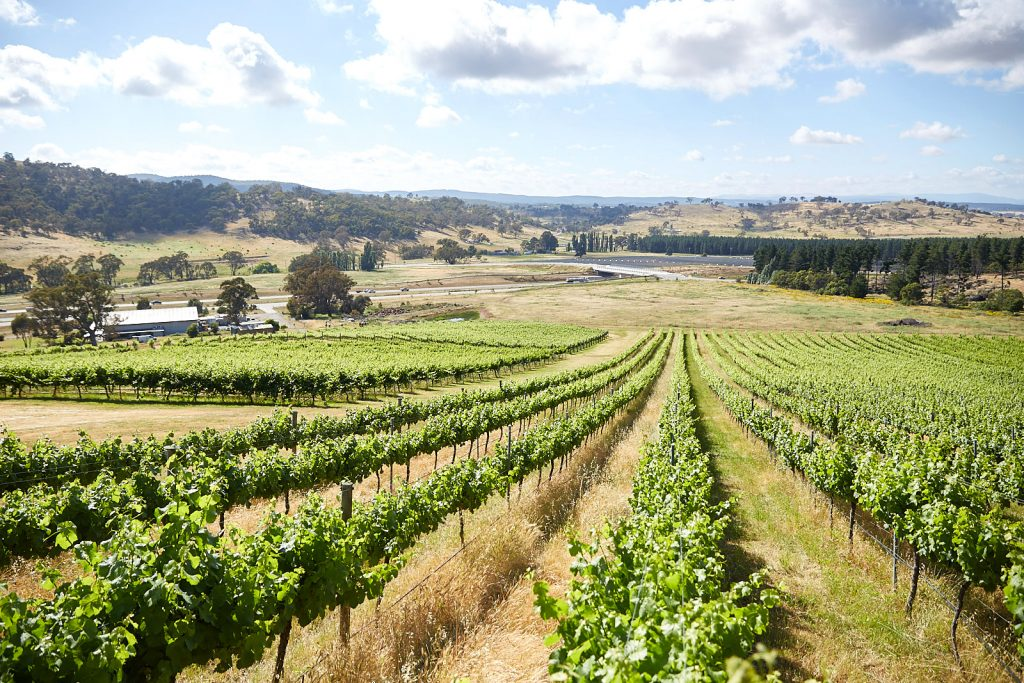 Vineyards in Canberra Region
