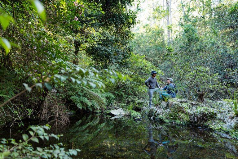 Lush rainforests