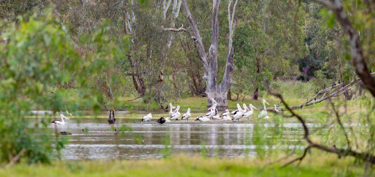 Wonga Wetlands Albury