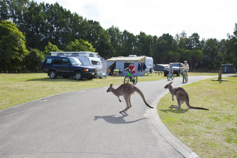 Kangaroos and camping